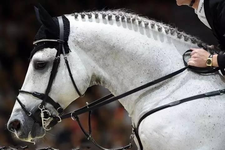 国际马联场地障碍世界杯赛:马明星们都来自哪
