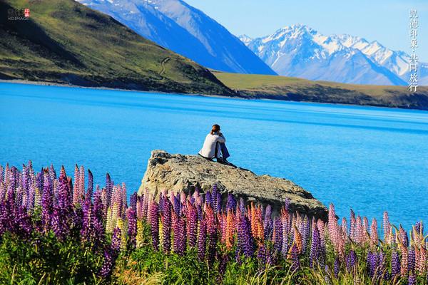 你不知道的新西兰 鲁冰花小镇特卡波