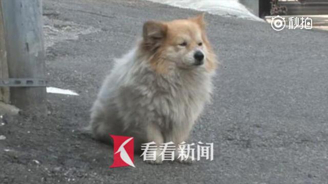 狗狗坐巷口三年等主人回家