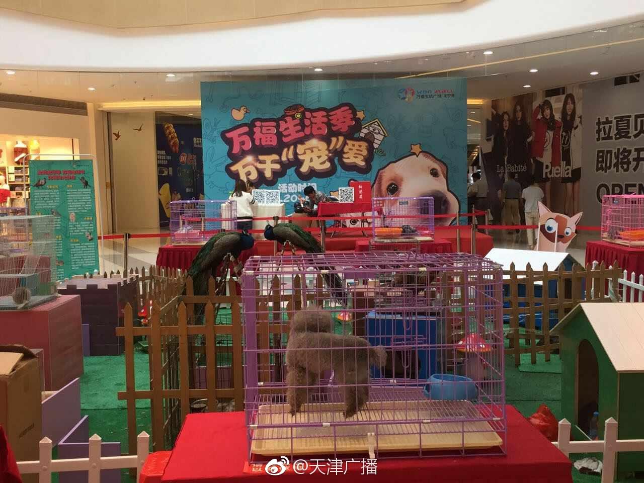 商场设立室内动物展示区 你怎么看?