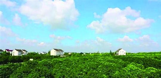 上海规划21个郊野公园 三大郊野公园下半年开园