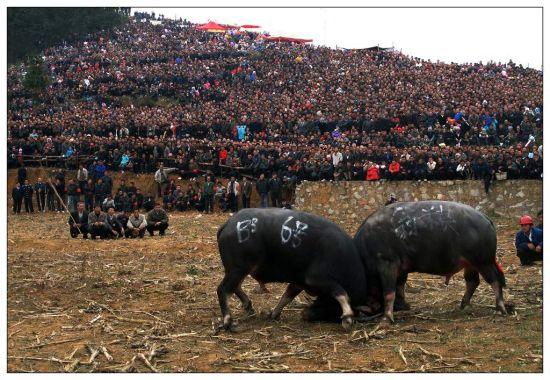 围观斗牛的群众