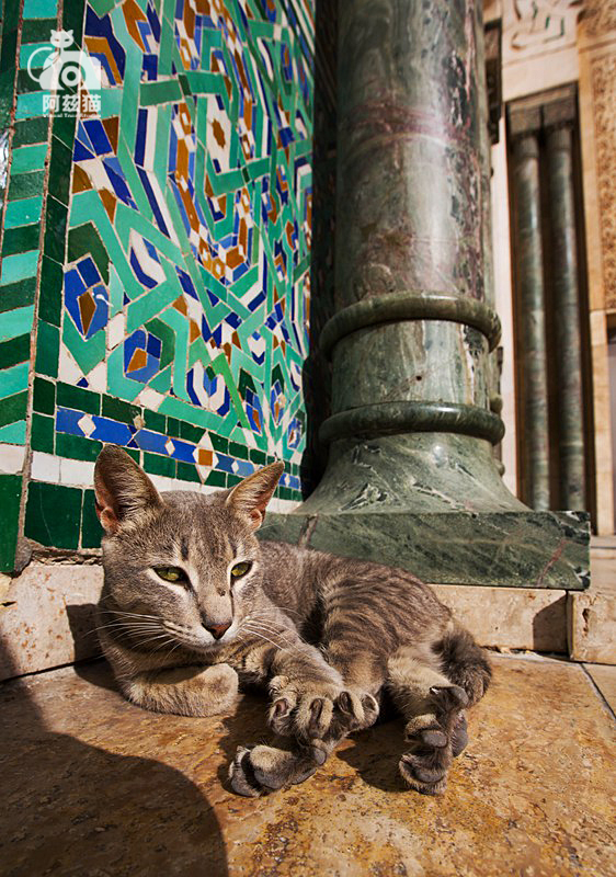 摩洛哥,喵星人的国度