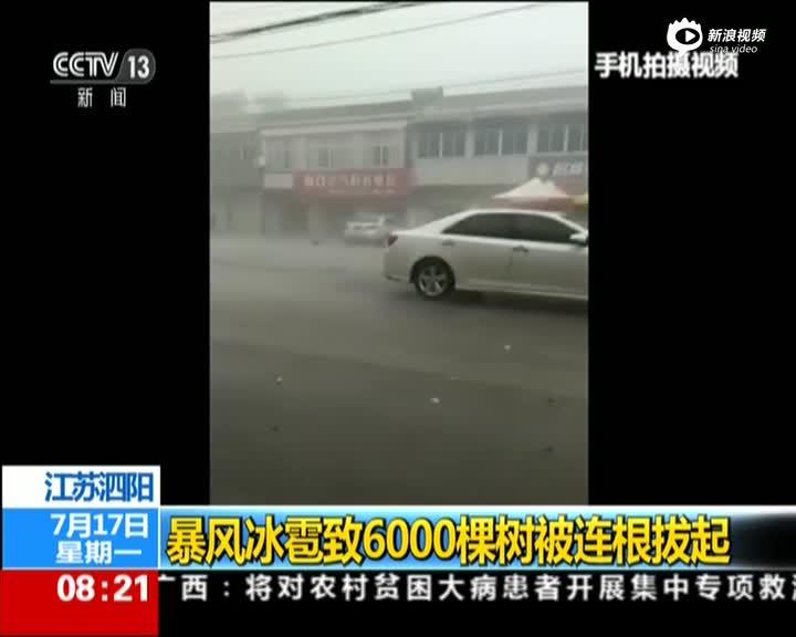 江苏泗阳:暴风冰雹致6000棵树被连根拔起