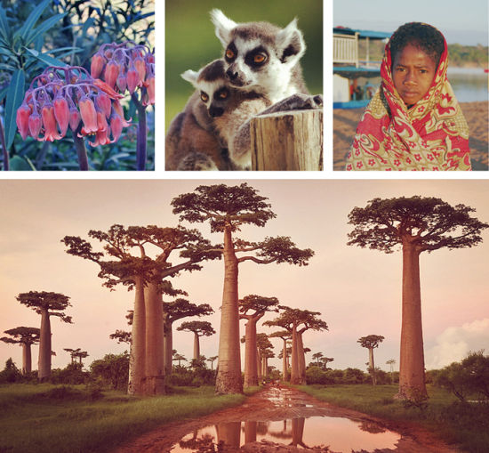 世外天堂非洲马达加斯加 邂逅仿若神迹的猴面包树