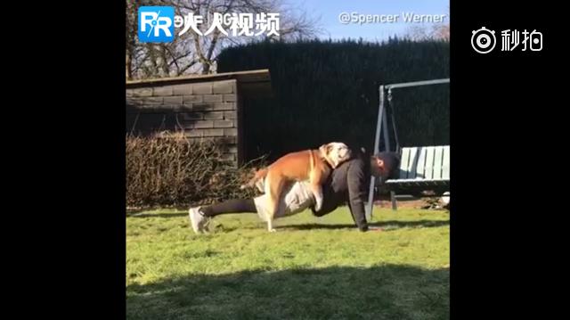 小哥看到别人家的狗狗和主人一起练瑜伽很羡慕,心里想着一定要和自家狗子试试...