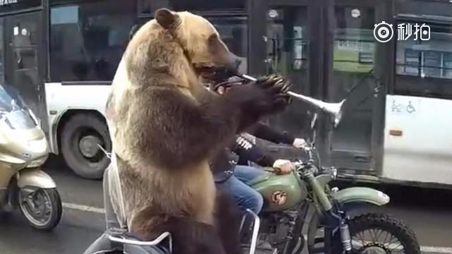 上次跟警察一起执勤的那只俄罗斯网红熊又来了!这次等红绿灯的时候它还吹起了...