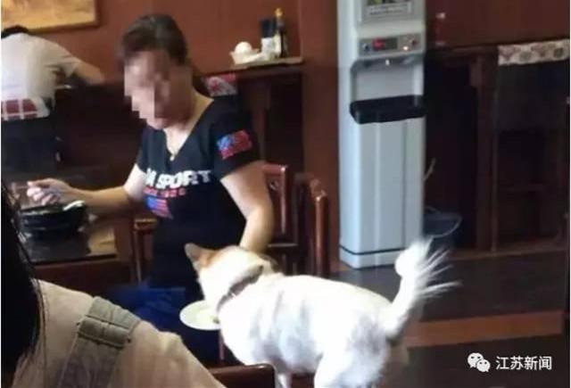 餐厅允许顾客用盘子喂狗,应遭抵制