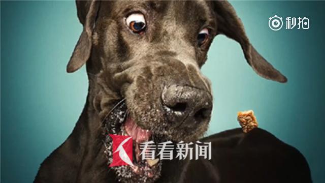笑哭了!德国摄影师捕捉狗狗吃食滑稽瞬间