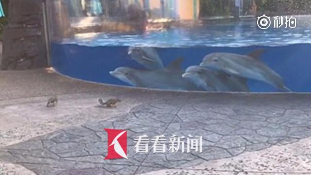 当吃瓜群众?四头海豚围观松鼠觅食 行动一致超呆萌
