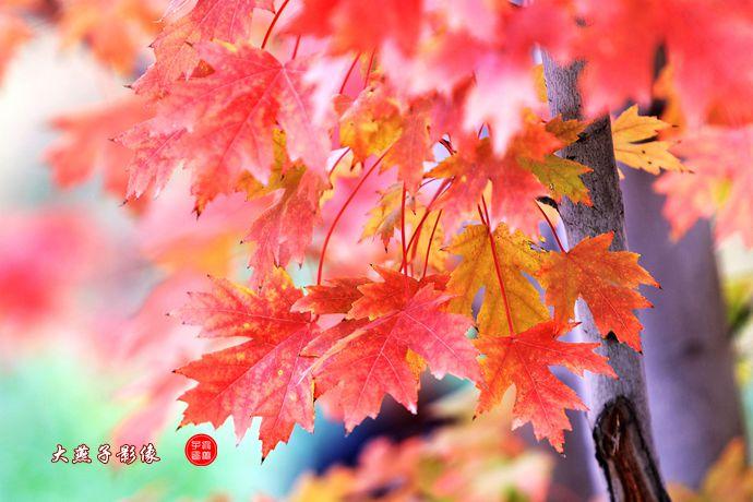 京城红叶迎秋
