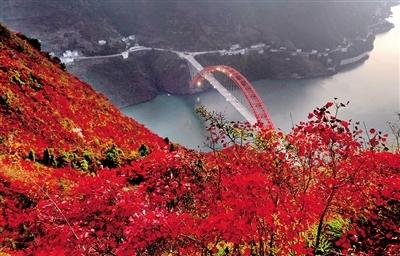 巫山国际红叶节下月开幕 满山红叶似彩霞
