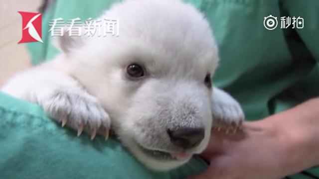 这只从小被抛弃的小北极熊 孤独许久后终于有了小伙伴