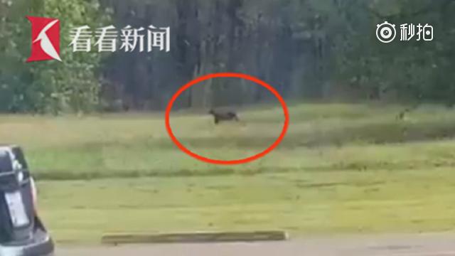美国民众称发现美洲狮 记者赶到现场直播却发现是只猫