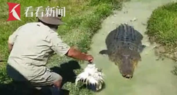 男子拿死鸡引诱3米长巨鳄上岸 骑在背上任意玩耍