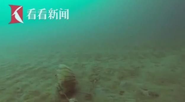 顽强水母竟在北极圈冰层下存活 科学家拍下海底罕见镜头