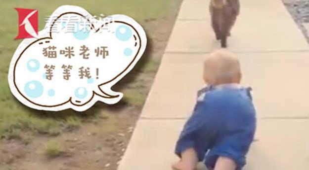 """""""猫咪老师""""等等我!宝宝模仿自家猫咪走路萌翻网友"""