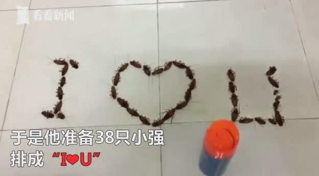 """越南一男生告白""""别出心裁"""":用38只活蟑螂拼成""""I❤U"""""""