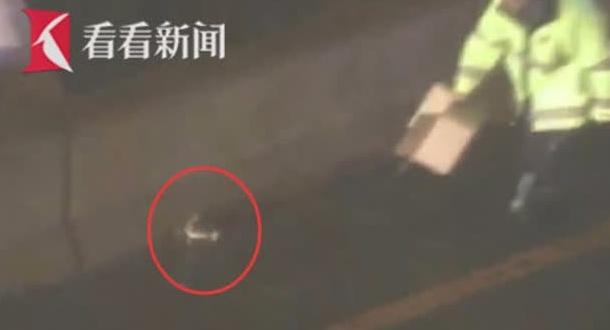 警察马路用纸箱抓捕灵活兔子 往返围捕多次最终用外套制服