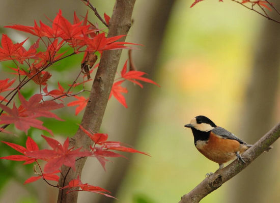 北京城观赏红叶最幽静的去处