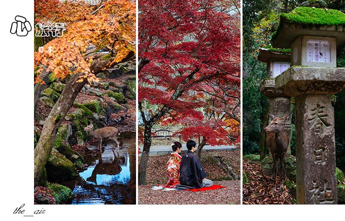 日本|奈良·秋天的童话