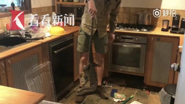 """一米八巨蜥钻入厨房吓傻主妇 捕手小哥1分钟揪尾拉出""""搞定"""""""