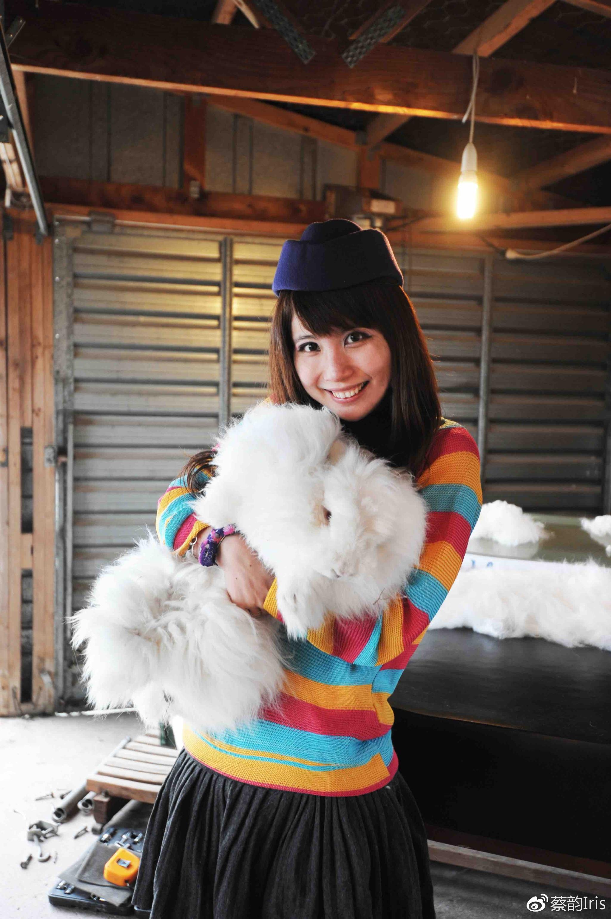 新西兰 剪兔毛初体验