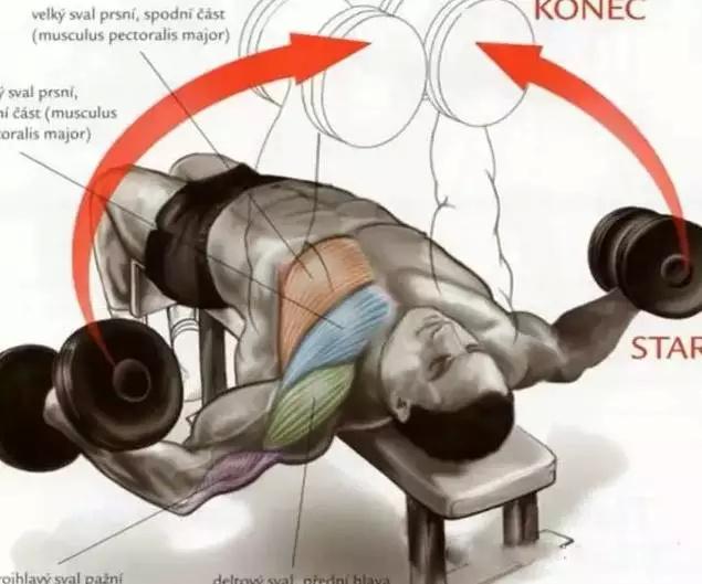 55个基础健身动作的肌肉训练图解和运动轨迹