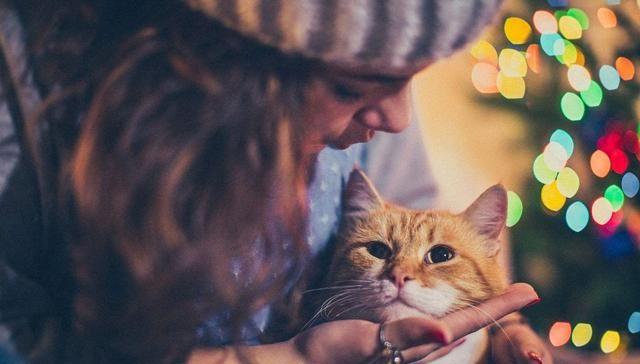 在不会让猫咪紧张或感到压力的情况下,与猫咪熟悉,可以轻松地摸到它图片