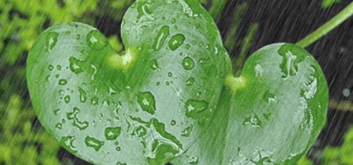 随笔:雨,桥和我的小姑娘(图)