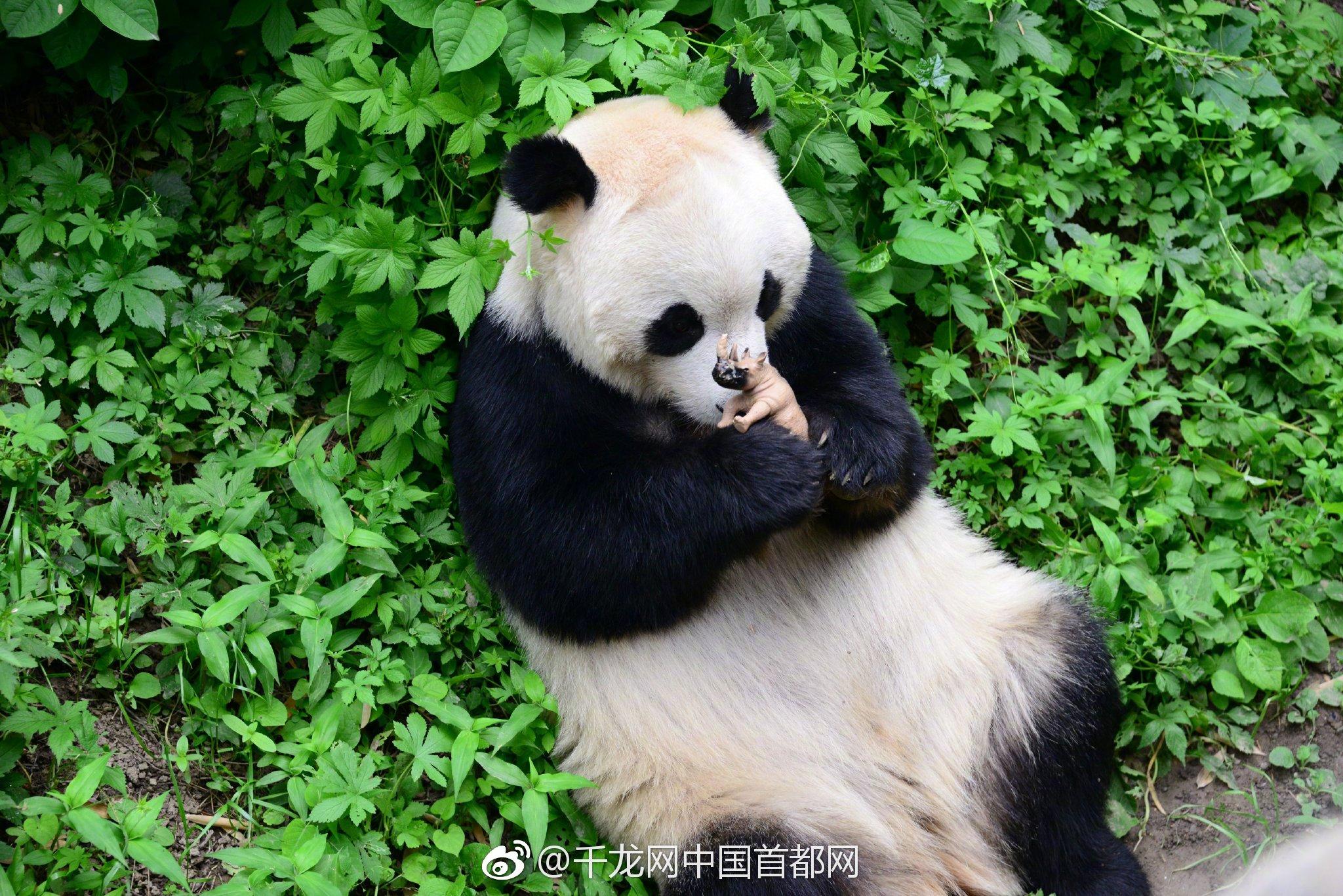 山东临沂49岁民警牺牲:过度劳累突发心梗