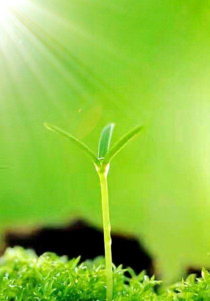 阳光青草·壁纸:我想抬头暖阳春草,我想一个眼神就到老!
