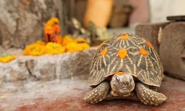 龟好养活?| 谣言粉碎机