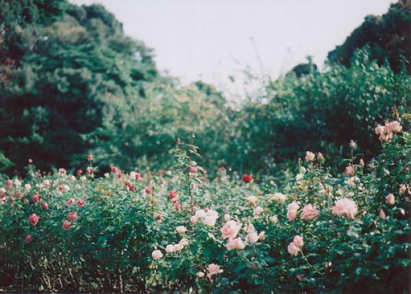 散文:春痕渐远,花落一纸轻愁