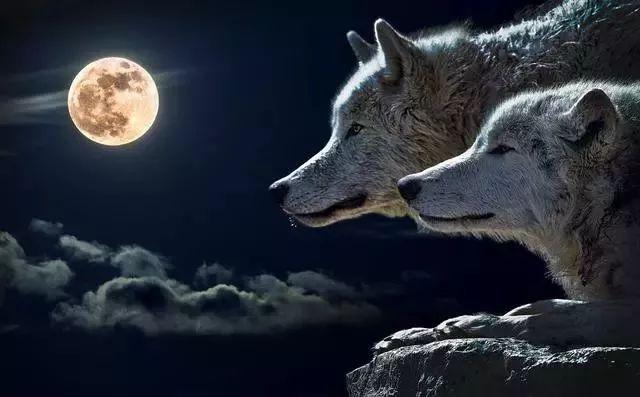 """极罕见天文奇观""""超级狼血月""""本周末将现身美国!"""
