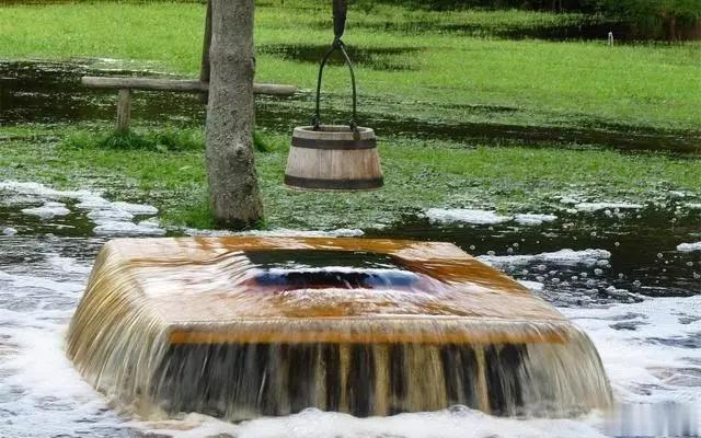 """活树""""喷泉""""!泉水从树干溢出,自然界真的好神奇"""