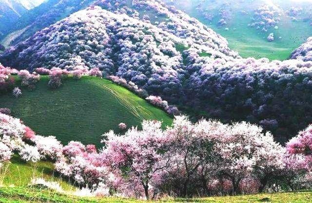 新疆伊犁杏花沟,美丽的大草原风光~