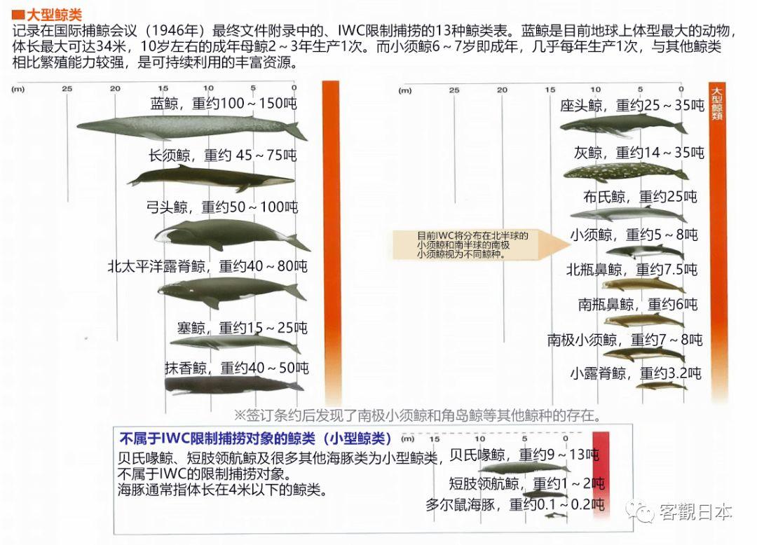 日本退出IWC恢复商业捕鲸 会吃更多鲸肉吗?