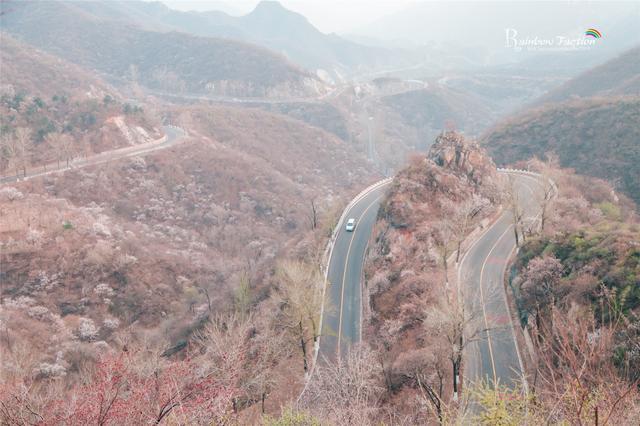 北京春天最美的路,错过等一年