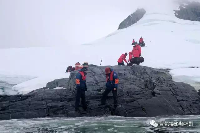 南极十面埋伏 聪明鲸屡唱空城计