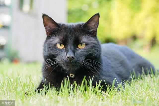 有一只黑猫,可爱至极!想不想抱抱它?