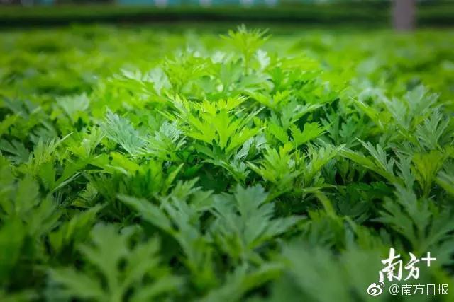 中国经济发展韧性十足