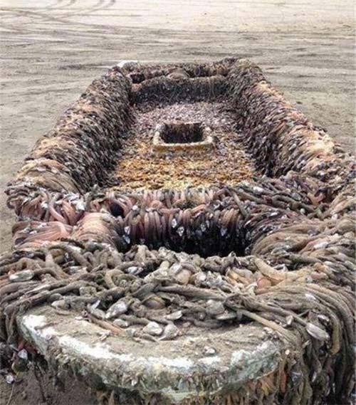 恐怖幽灵船漂至日本被发现这艘恐怖幽灵船上长满了奇怪的东西
