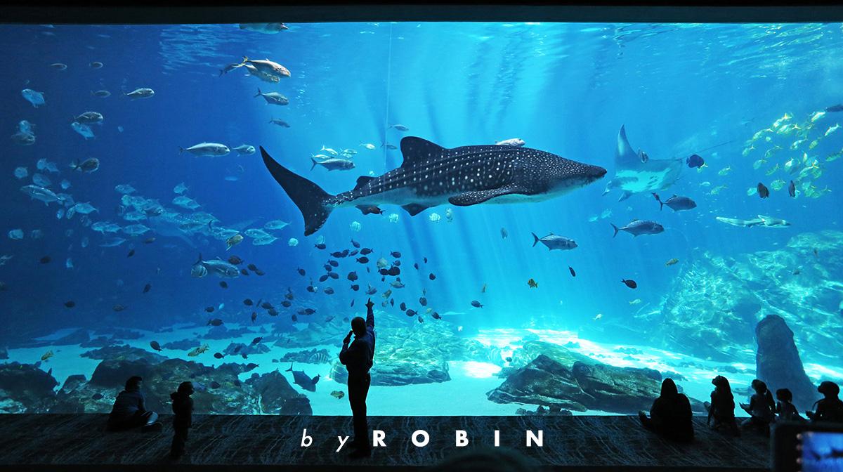 美国两万里—世界最大海洋馆
