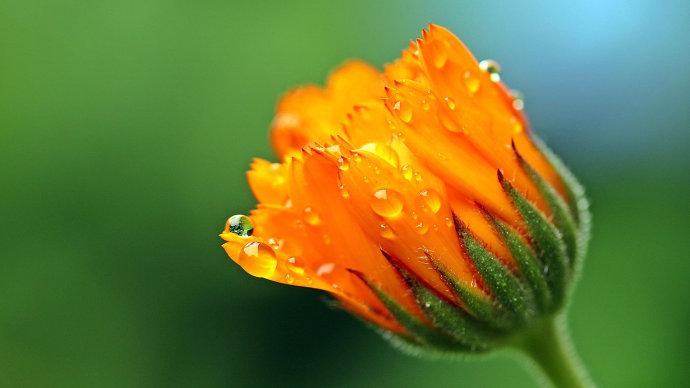 散文:活着,以一种花开的姿态