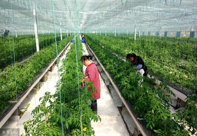 农业发展新模式——认养农业