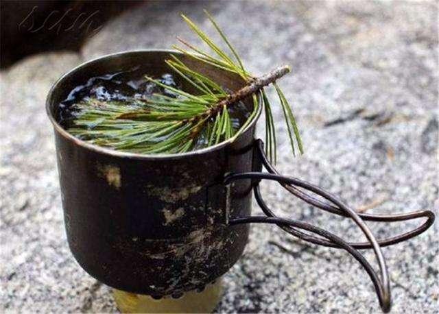 农村一种常见的树,叶子如针能去口臭,晒干泡茶还能养生