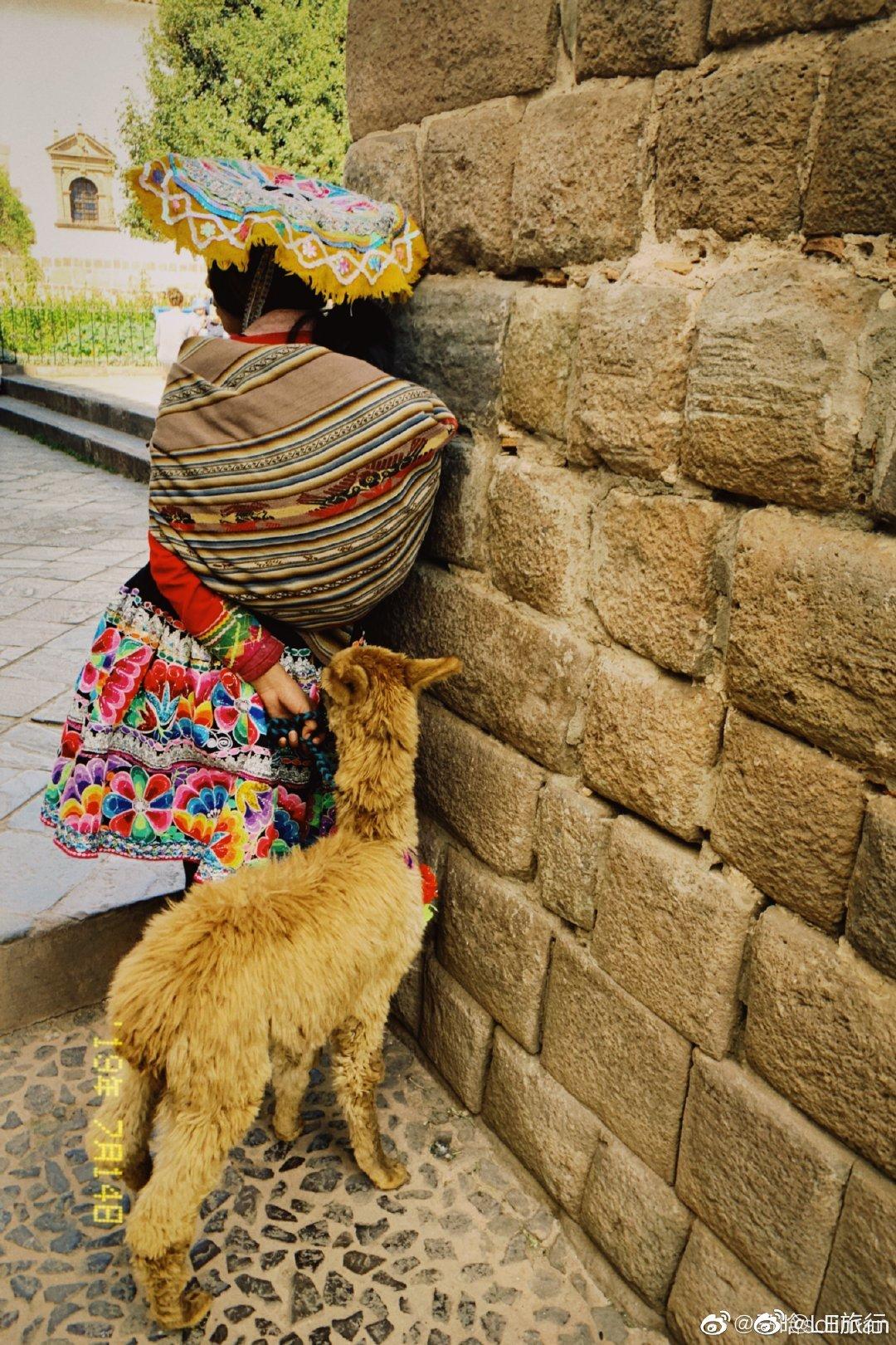 秘鲁女人放羊的日常