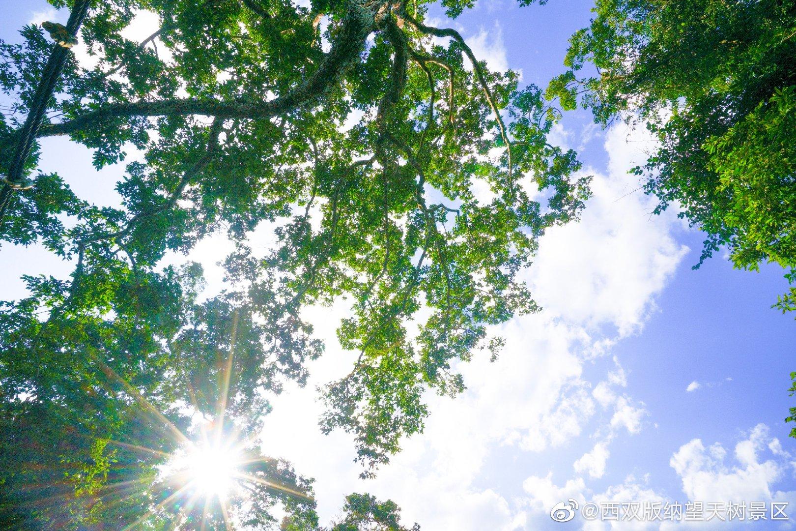 夏至已至 记忆里夏天的样子