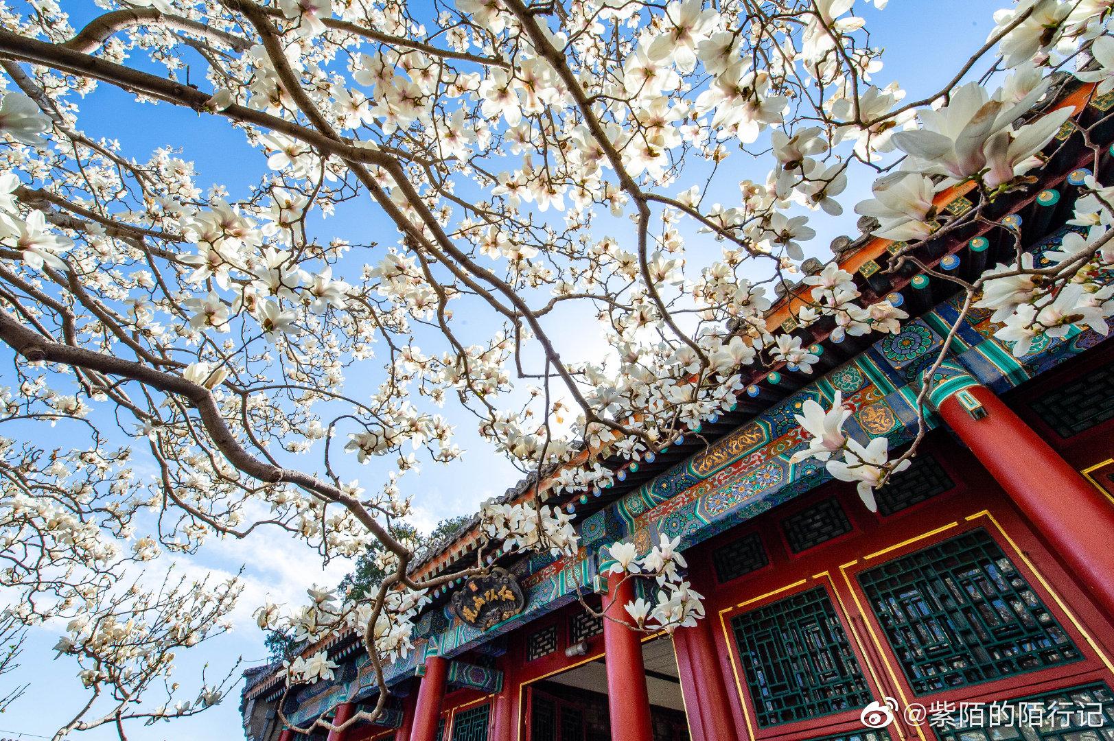 皇家园林颐和园也到了赏花的时节
